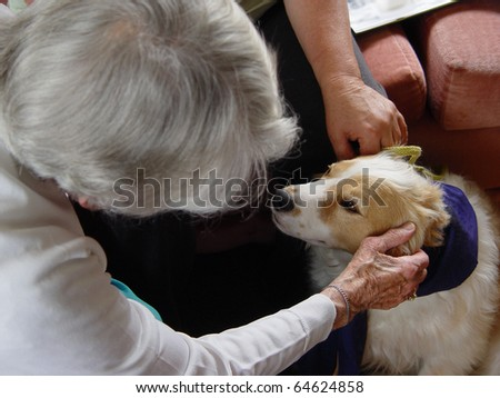 Pet therapy series. Beautiful cream and white dog in a rest home being petted by an elderly resident