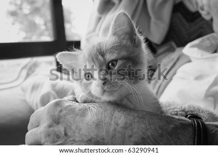 Pet therapy series. Black and white image of a kitten sitting on the lap of an elderly rest home resident. - stock photo