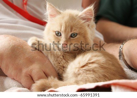Pet therapy series. Kitten sitting on the lap of an elderly rest home resident