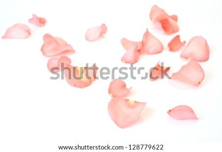 Petals of a pink rose #128779622