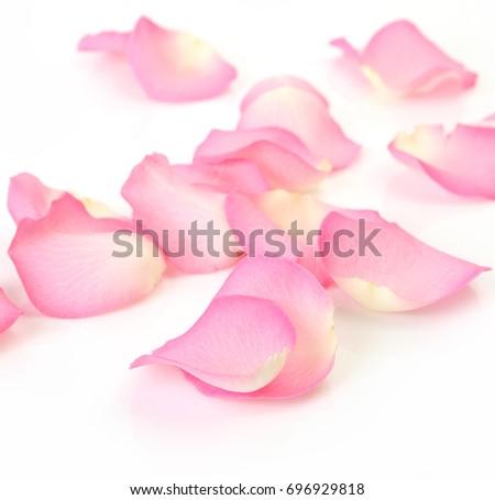 petals of a pink rose #696929818