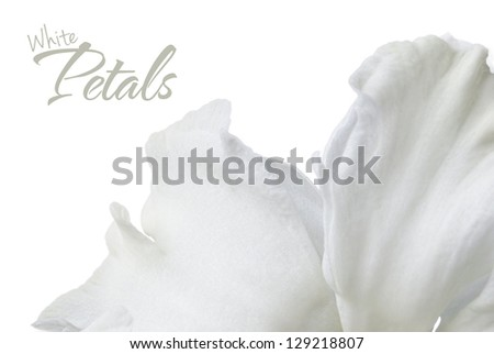 Petals of a white narcissus isolated on a white background