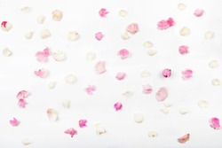 Petals of pink roses on a light background.