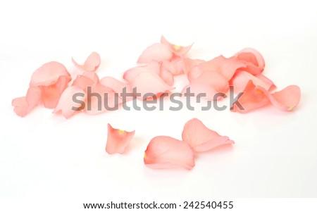 Petals of roses  #242540455