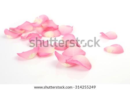 petals of roses #314255249