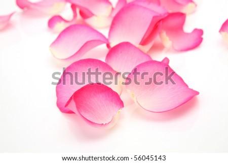 Petals of roses #56045143