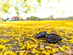 Petals of yellow flower falling on the ground,  sun glasses isolated on it.