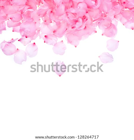 petals pink almond lined both side isolated on white background