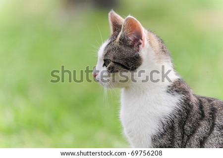 petite little kitten playing on the grass Cat's child