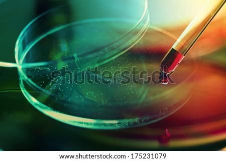 Petri dish. Laboratory concept.