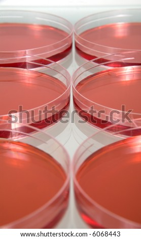 Petri dishes lined up