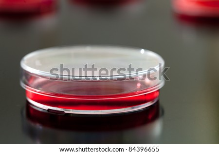 Petri dishes used for eukaryotic cell culture in  solid agar.