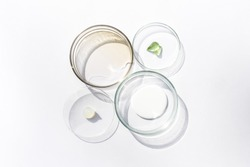 Petri dishes with cosmetic on white background. Top view, flat lay. Concept skincare. Dermatology science cosmetic laboratory. Natural medicine, cosmetic research, organic skin care products.