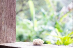petrified coral lies on a wooden window, view from the window on green juggles, blurred background
