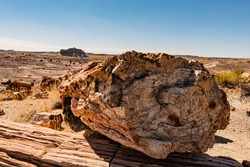 Petrified log from Petrified Forest National Park