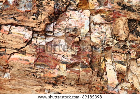 Petrified wood, closeup background
