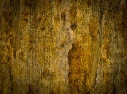 petrified wood detail