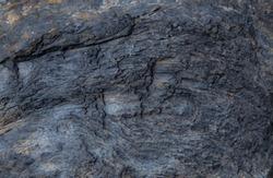 Petrified wood texture