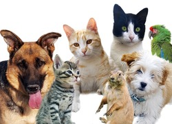Pets animals group collage for pet shop or veterinary on white background