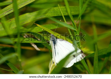 pets  animals  insects  butterfly insect nature