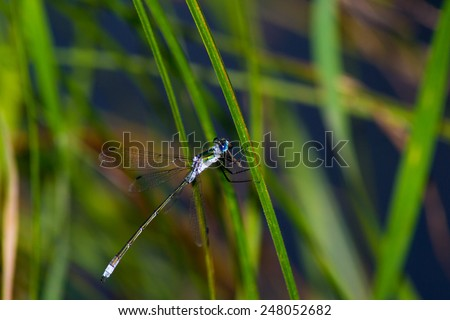 pets  animals insects  insect dragonfly isolated