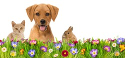 Pets in a spring flower meadow