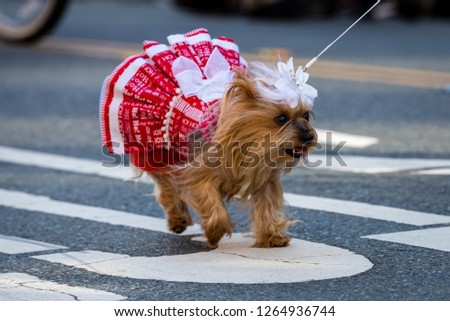 Pets parade, San Diego, CA #1264936744