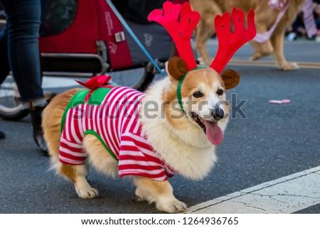 Pets parade, San Diego, CA #1264936765