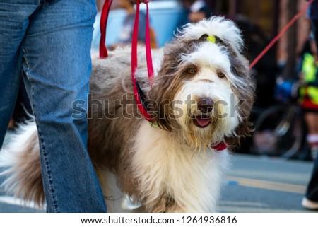 Pets parade, San Diego, CA #1264936816