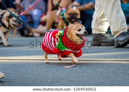 Pets parade, San Diego, CA #1264936852