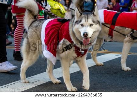 Pets parade, San Diego, CA #1264936855