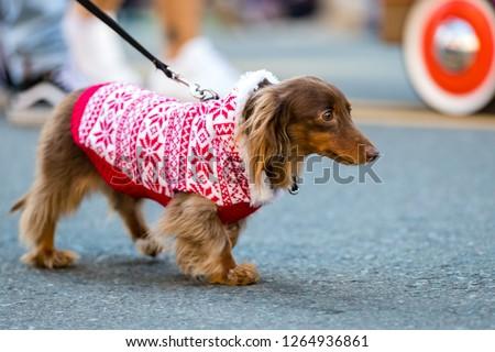 Pets parade, San Diego, CA #1264936861