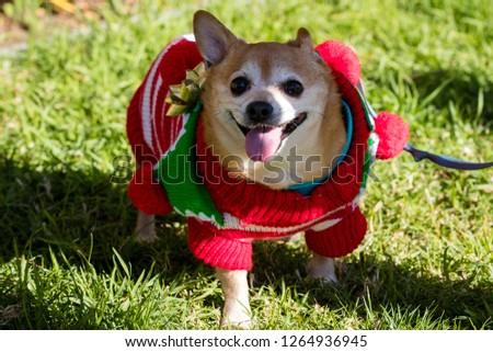 Pets parade, San Diego, CA #1264936945