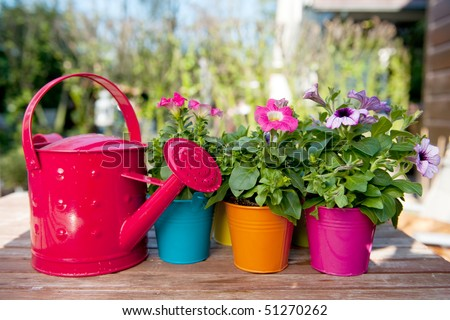 Petunia flowers and watering can with many colors
