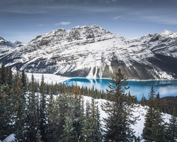 Peyto Lake Viewpoint covered in snow, Banff National Park, Alberta, Canada