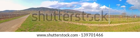 Pfaffst�¤tten, Lower Austria: Vineyard in the winter time