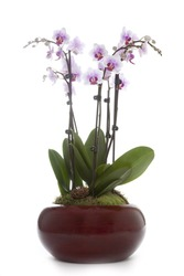 Phalaenopsis orchid table decoration