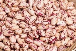 Phaseolus vulgaris - close-up raw white bean kernels.