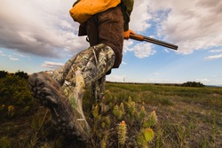 Pheasant Hunting Montana Grasslands