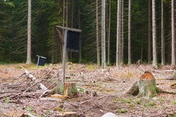 Pheromone trap against ips typographus in the middle spruce forest. The European spruce bark beetle Ips typographus, is a species of beetle in the weevil subfamily Scolytinae, the bark beetles.