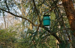 Pheromone trap against pine processionary moth among the branches of a tree in a forest