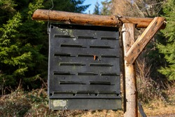 Pheromone trap for the European spruce bark beetle. (Ips typographus.) Forest protection.
