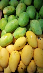 Philippines green and yellow mangoes.