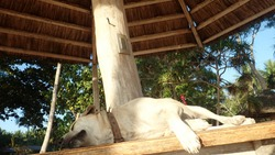 Philippines Palawan Islad Kanigaran Beach sleeping dog
