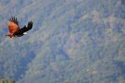 photo about an flying eagle on the sky