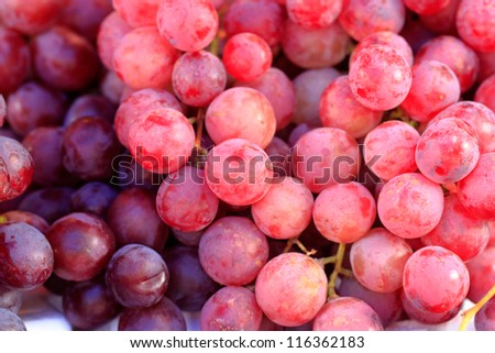 Photo: Agriculture wine red grapefruit