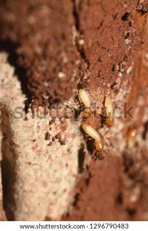 photo close up of termite at yard