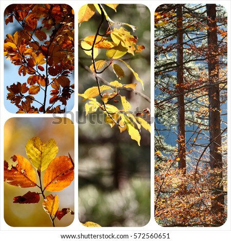 Photo collage autumn - Shutterstock ID 572560651