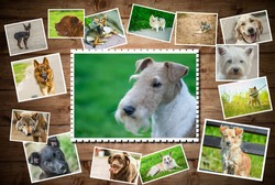 Photo collage Dogs of different breeds.