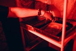 Photo development. Darkroom, Ambrotype. Red light.